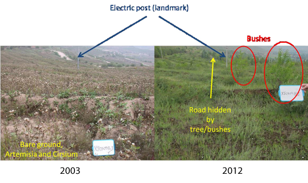 Comparison of the same reforestation area between 2003 and 2012, south of Xiji, with conspicuous differences